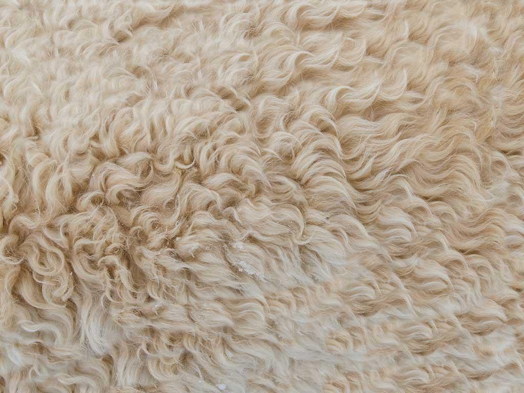 laine la plus chaude du monde