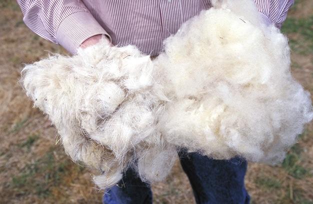 La laine traitements et caract ristiques - Les differents types de laine ...