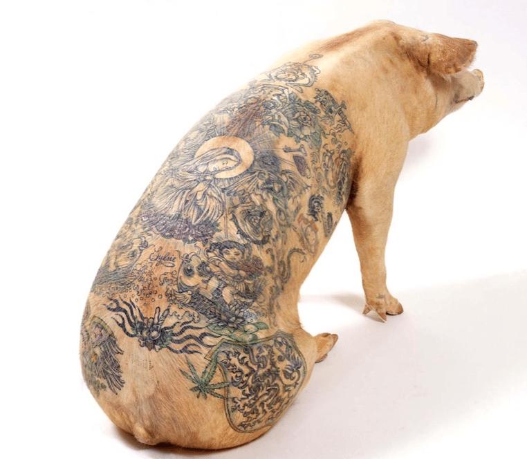 cochon tatoué