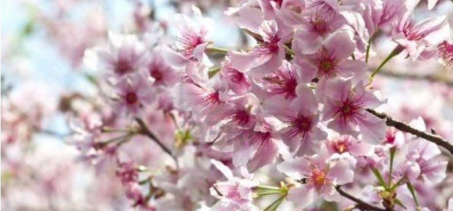 parfum fleuri