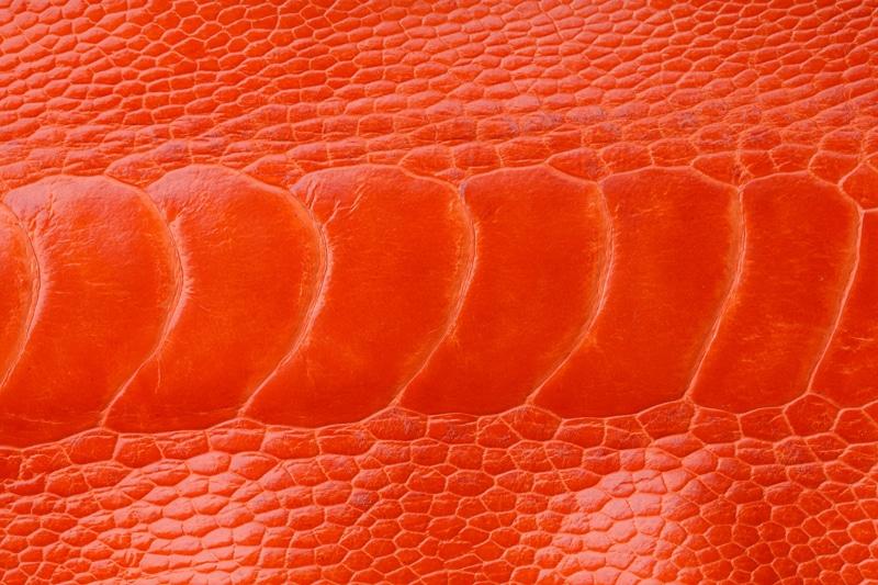 cuir patte d'autruche