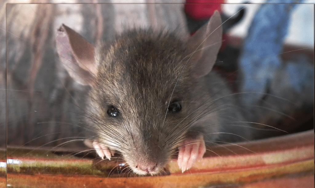 Flight hacking : faire la petite souris